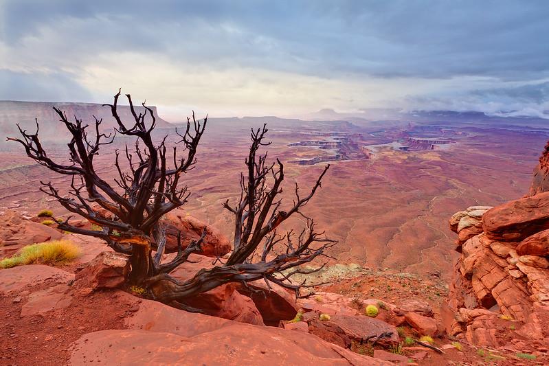 """""""Green River Overlook"""" Canyonlands NP, Utah"""