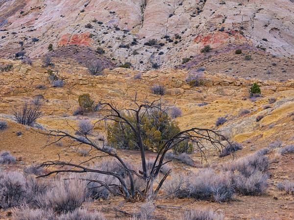 """""""Alone"""", Utah"""