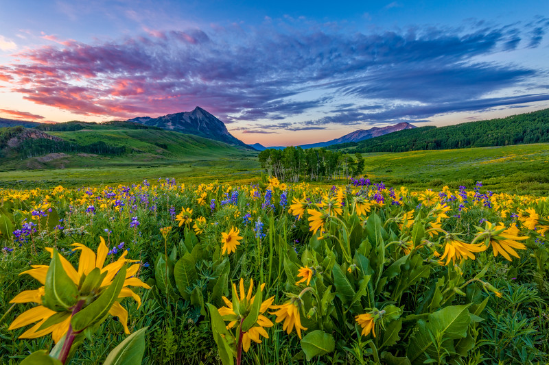 """Wild Sunflower Sunset"" Crested Butte, Colorado"