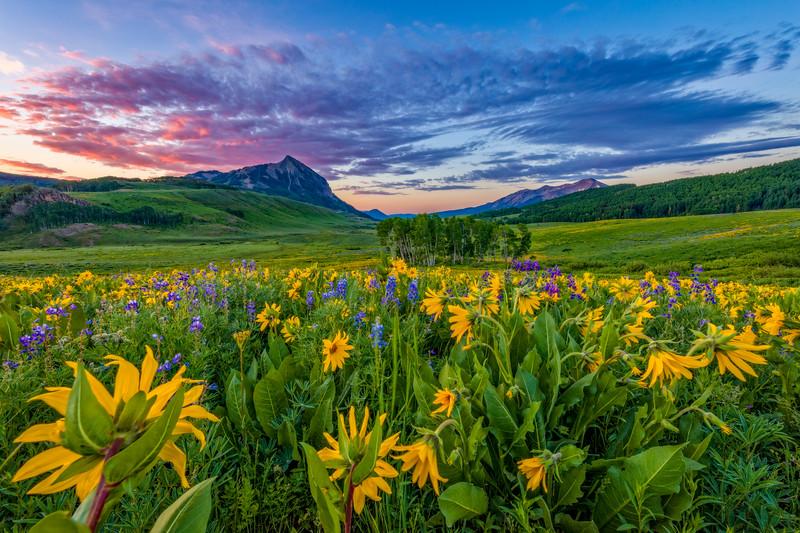 """Wild Sunflower Sunset"" Crested Butte, Colorado"
