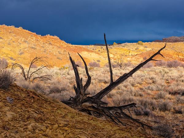 """'Aged tree"""", Utah"""