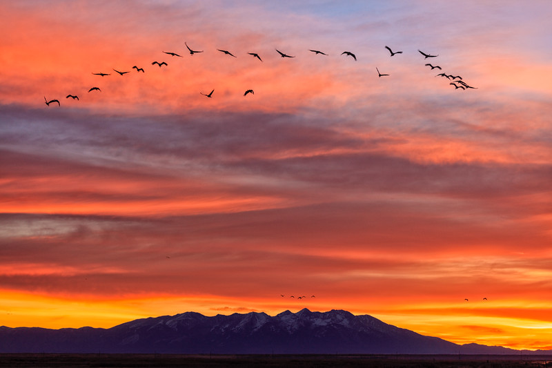 """Sandhill Cranes at Sunrise"" Monte Vista, Colorado"