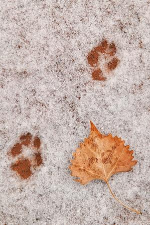 """Paw Prints in the Snow"" Capitol Reef NP, Utah"
