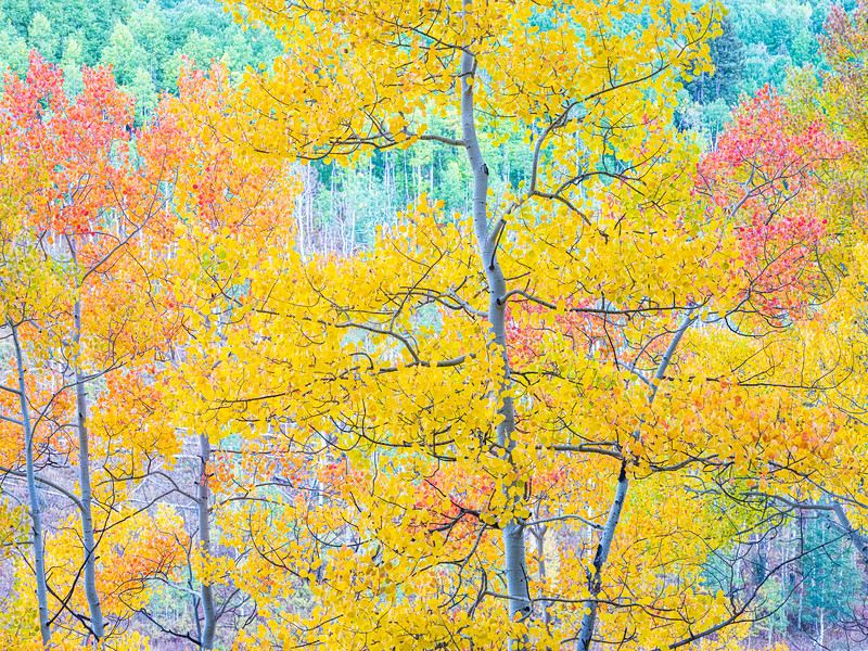 """Just colors"", Gunnison, Colorado"