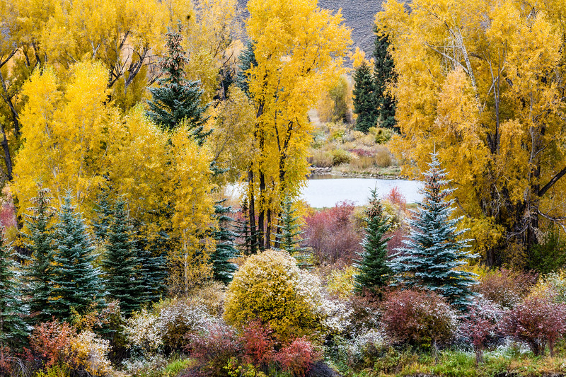 """Fall Colors and the Gunnison River"" Almont, Colorado"