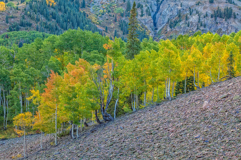"""Early Colors"" Ohio Pass, Gunnison, Colorado"
