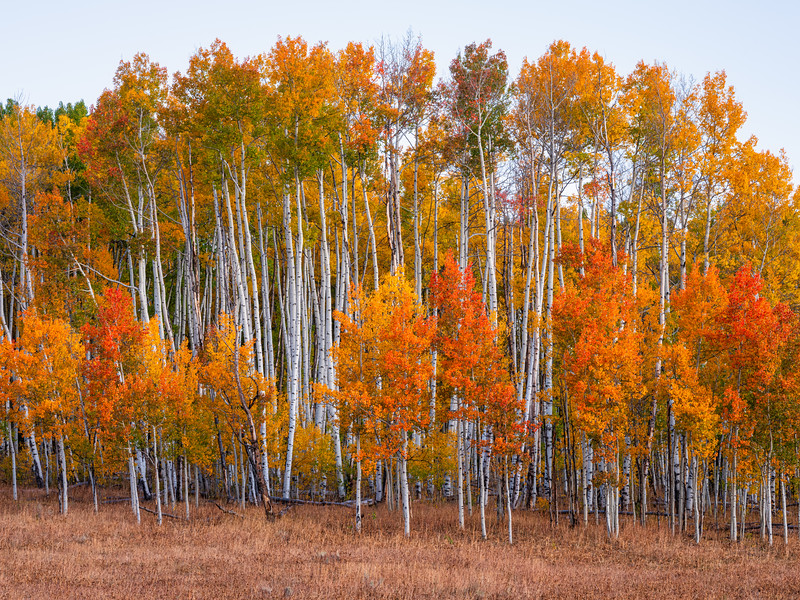 """Orange grove"", Ohio Pass, Gunnison, Colorado"