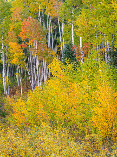 """Shades of Fall"", Ohio Pass, Gunnison, Colorado"