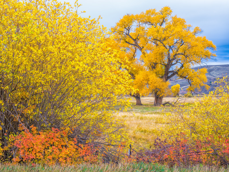 """Shades of Fall"" Gunnison Colorado"