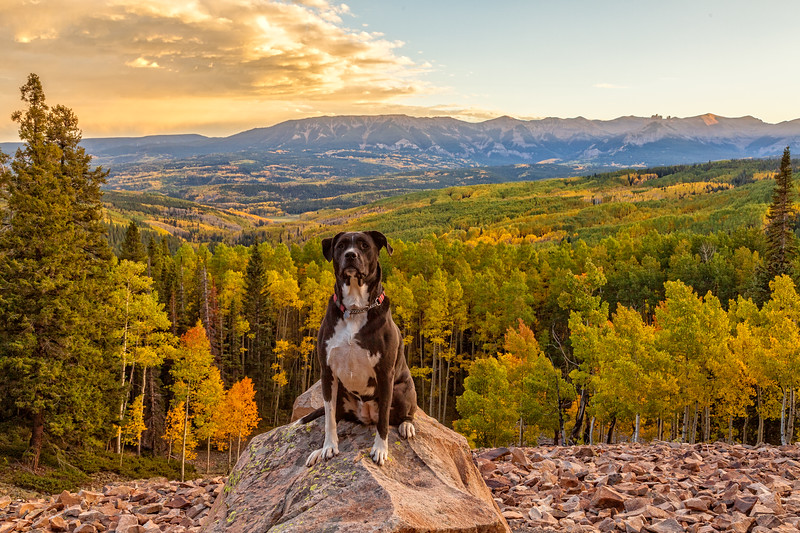 """Forest Guard"" Ohio Pass, Gunnison, Colorado"
