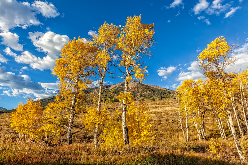 """Carbon Mountain and Fall Aspens"" Ohio Creek, Gunnison, Colorado"