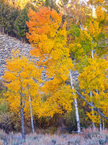 """More colors"" Gunnison, Colorado"