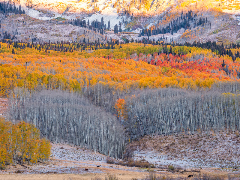 """Every Color of Fall"" Ohio Pass, Gunnison, Colorado"