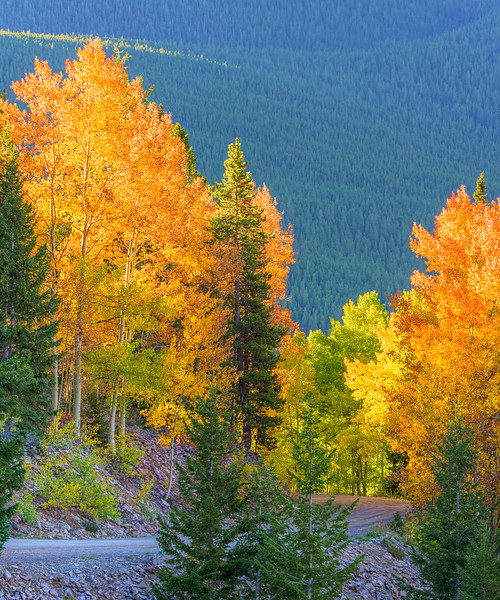 """Fall Colors"" Ohio Pass, Colorado"