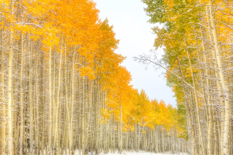 """Fall Aspen & Snow"" Star Mountain, Colorado"