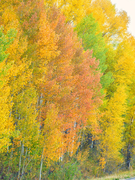 """Fall Aspen"" Ohio Creek, Colorado"