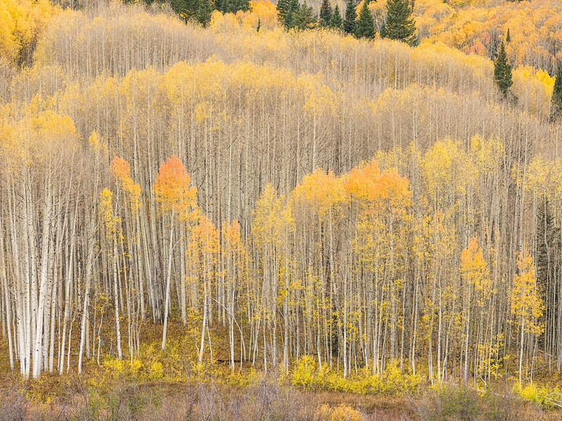"""Last of the Leaves"" Kebler Pass, Colorado"
