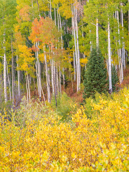 """Fall Layers"", Ohio Pass, Gunnison, Colorado"