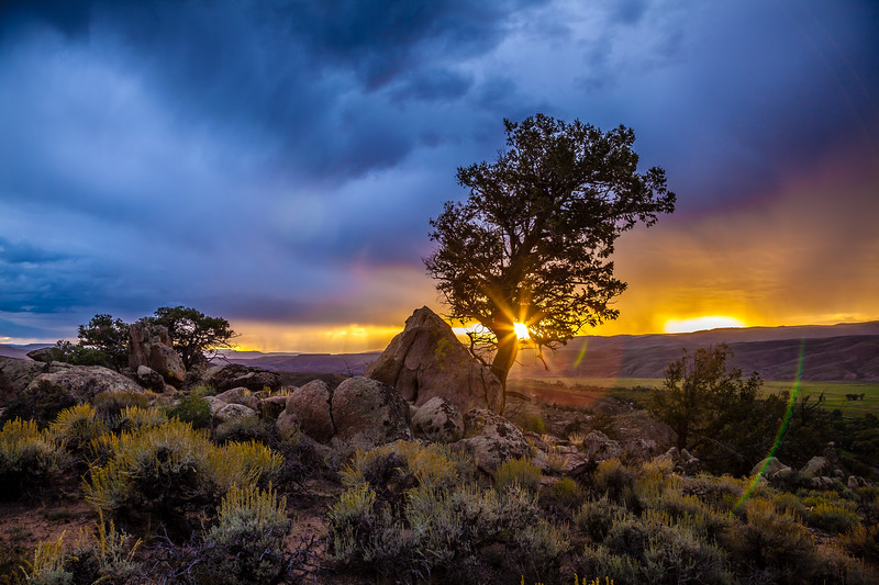 """Tree at Sunset"" Hartman Rock, Gunnison, Colorado"
