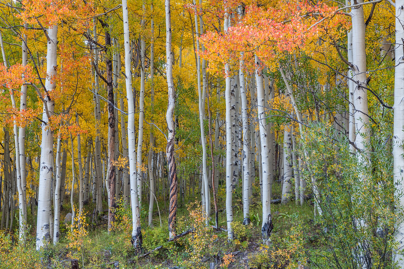 """Fall"" Ohio Creek, Colorado"