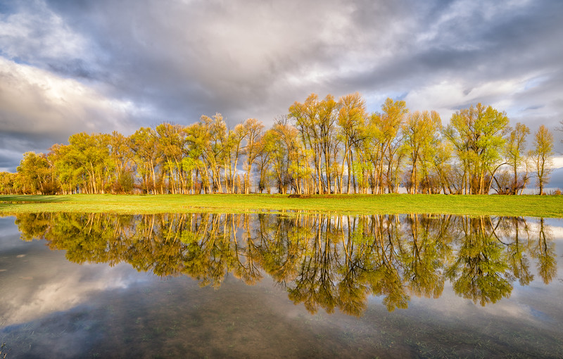 """Cottonwood & Cloud Reflections"" Gunnison, Colorado"