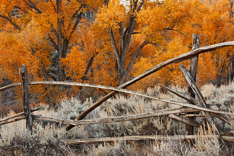 Fence and Fall Colours, Hartman Rocks Gunnison Colorado