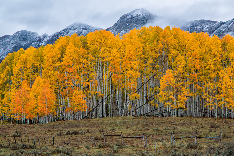 """Swampy Pass Aspen Grove & Snow Covered Mountains"" Gunnison, Colorado"