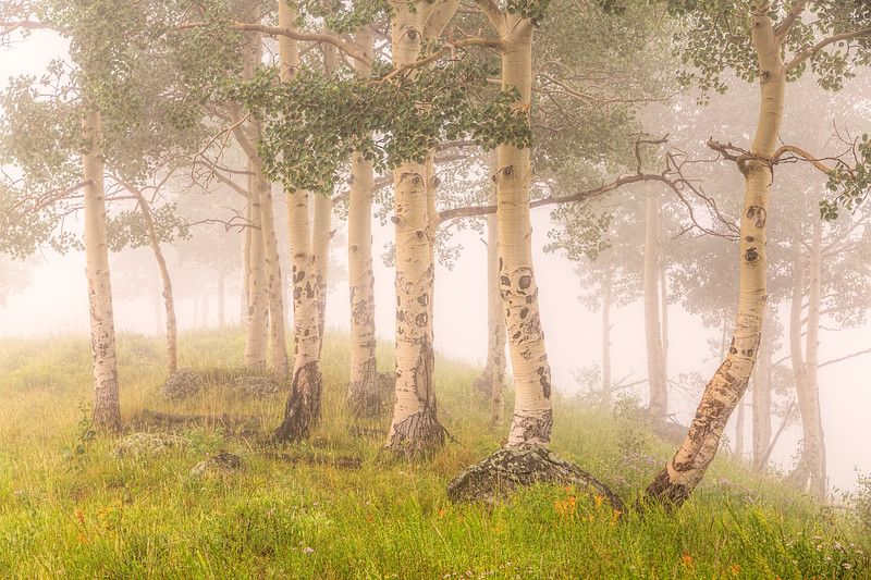"""Aspen in the Mist"" Whetstone Mts, Colorado"