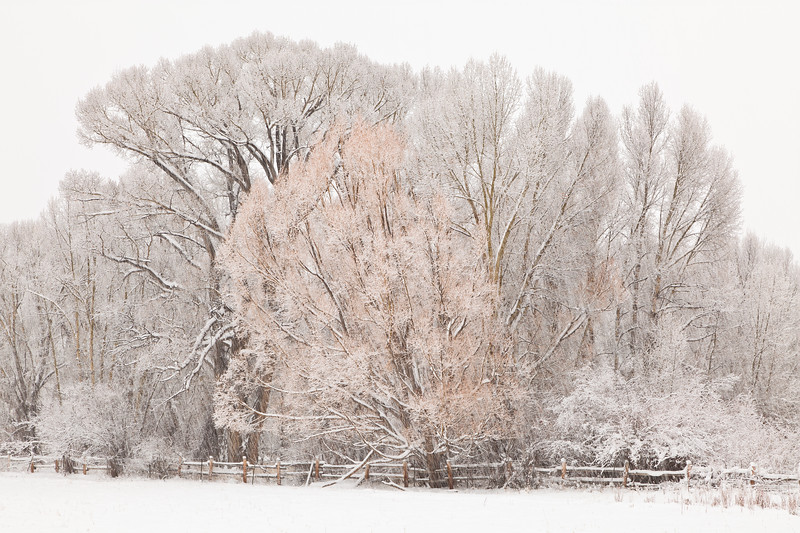 """Trees and Fence in Storm"" Gunnison, Colorado"