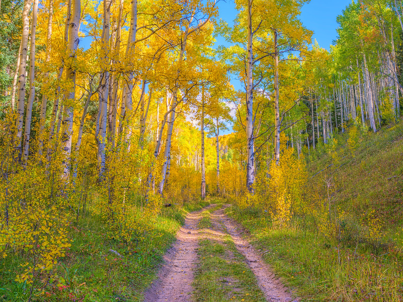 """Fall Road"" Colorado"