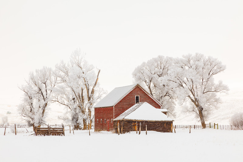 """Spann Barn & Cottonwoods"" Gunnison, Colorado"