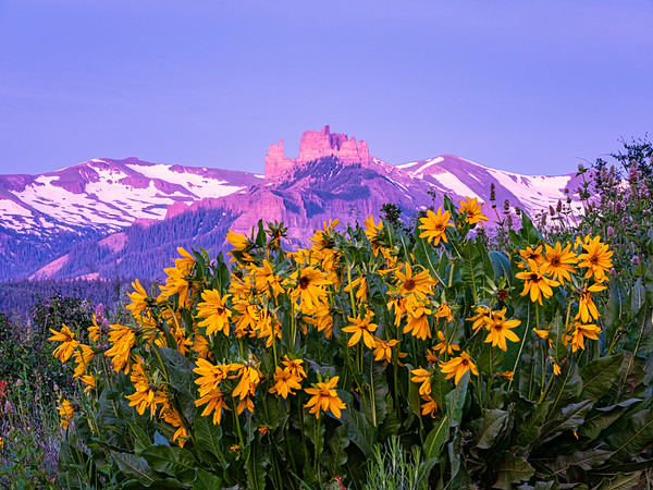 """""""Castles and Flowers"""""""