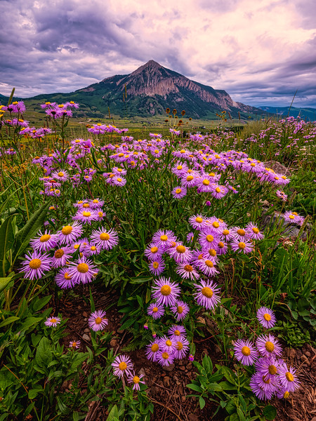 """Crested Butte loves flowers"", Crested Butte, Colorado"