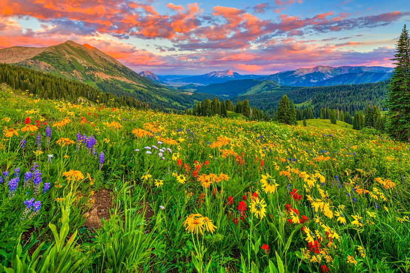 """Colorado Wild Flower Sunset"" 403 Trail, Washington Gultch Colorado"