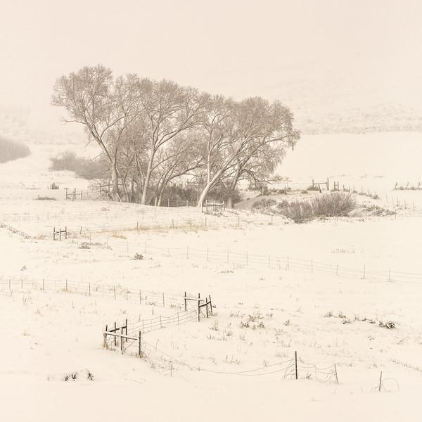 """Cottonwood & Fence"" Gunnison, Colorado"