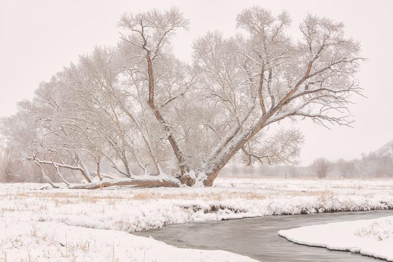 """""""Snow"""" Gunnison, Colorado"""