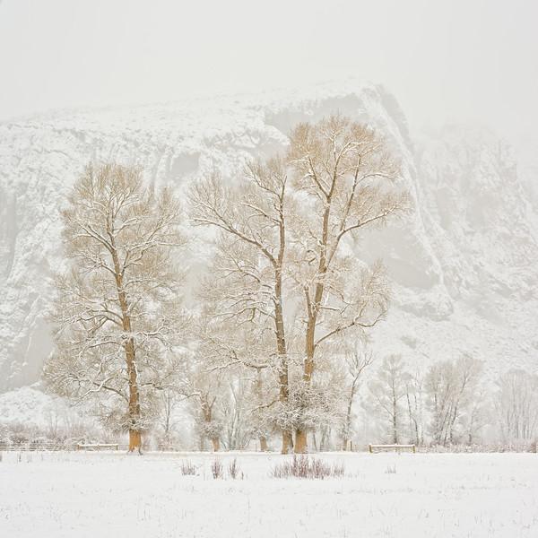 """Cottonwood & Palisades"" Gunnison, Colorado"
