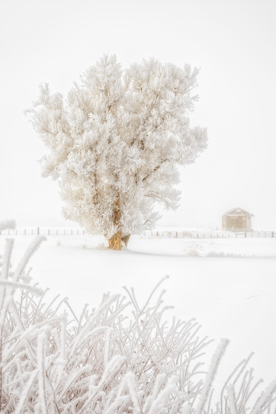 """Barn and Tree in Snow"" Gunnison, Colorado"