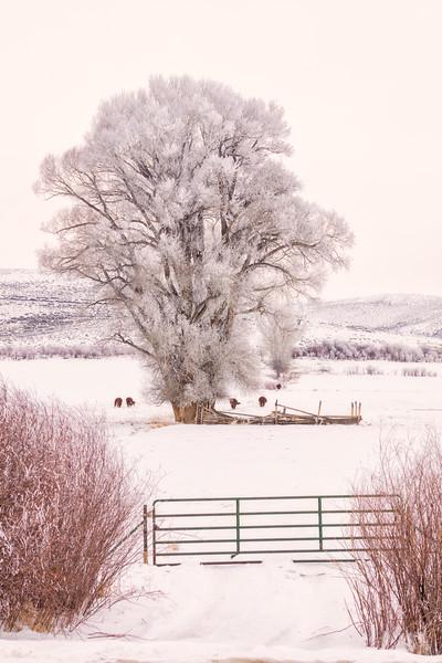 """Frozen in Time"" Gunnison, Colorado"