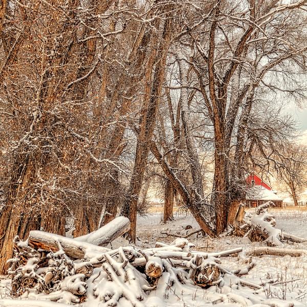 """""""Shining in the Snow"""" Gunnison Colorado"""