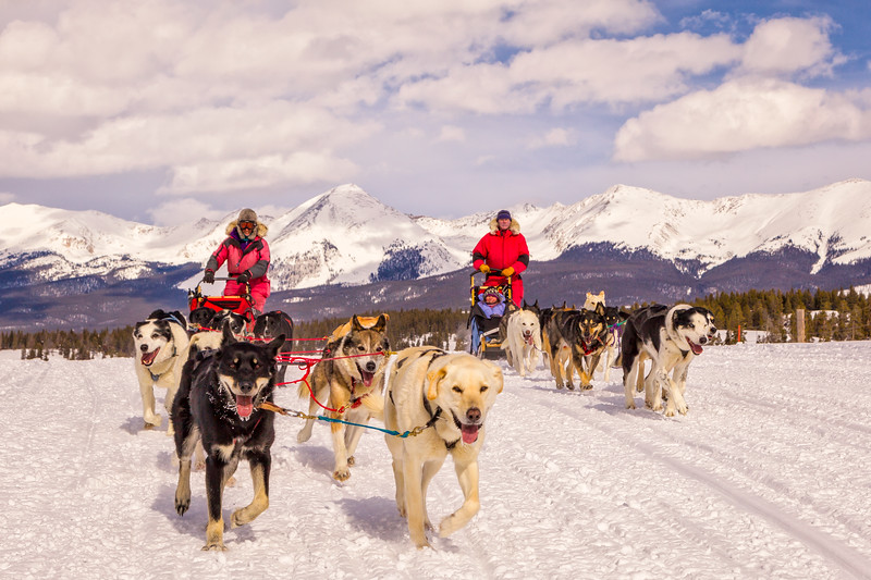 """Dog Sledding"" Taylor, Colorado"