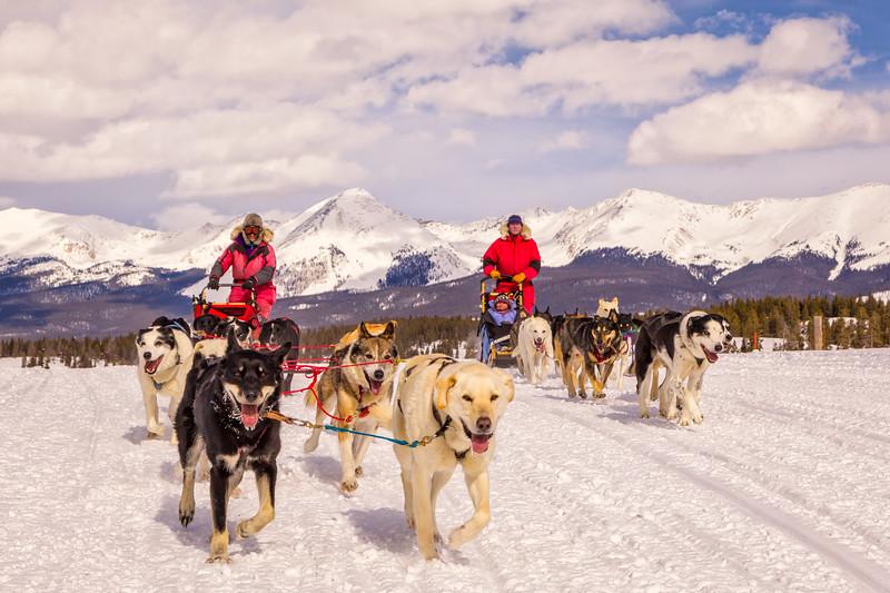 """Dog Sledding"" Taylor, Colorado"