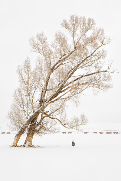 """Swinging in the Snow"" Crested Butte, Colorado"