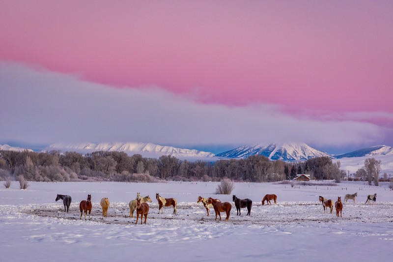 """Horse Herd in the Snow"" Ohio Creek, Colorado"