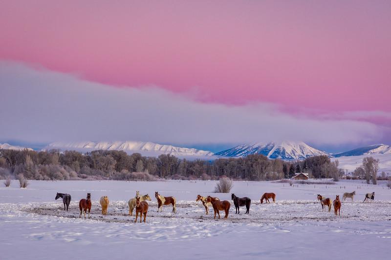 """Horse Herd in the Snow"" Ohio Creek, Colorado"
