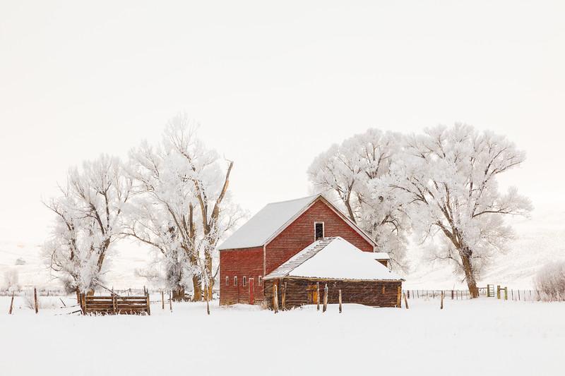 """Spann Barn & Cottonwoods"" Gunnison, Colorado"