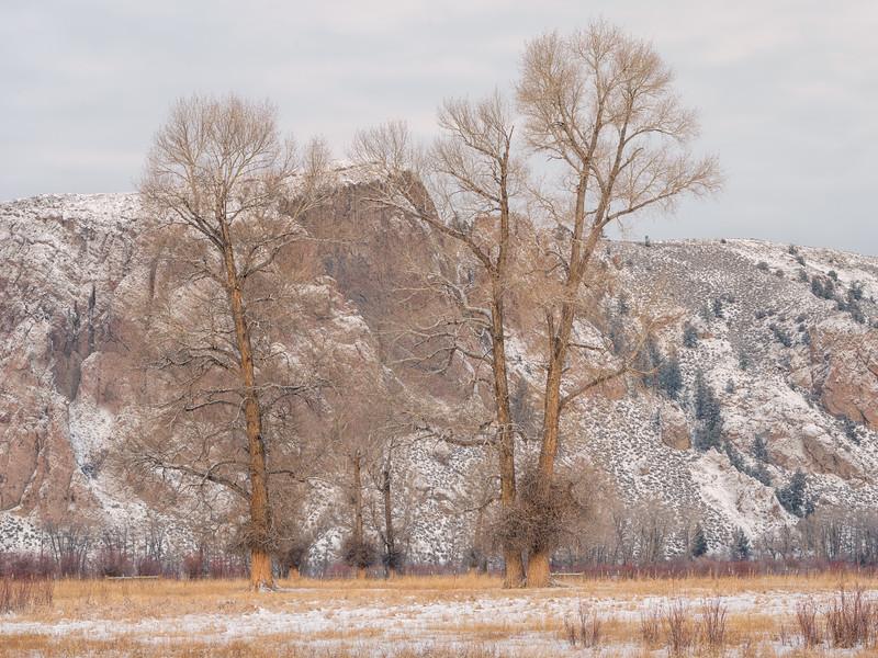 """Cottonwoods"" Gunnison, Colorado"