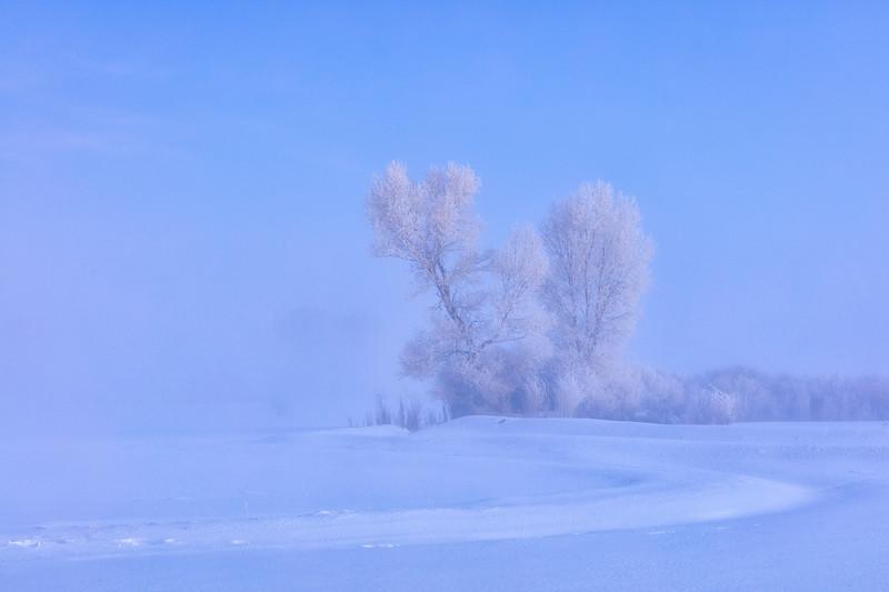 """Cold & Frosty Morning"" Gunnison, Colorado"