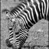 """ Twins"", Tanzania"