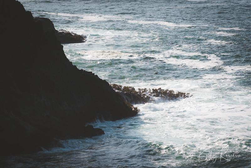 Soaking up the waves. Off the Oregon coast.
